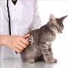 Ветеринарные клиники в Ржанице